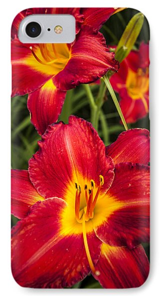 Day Lilies Phone Case by Adam Romanowicz