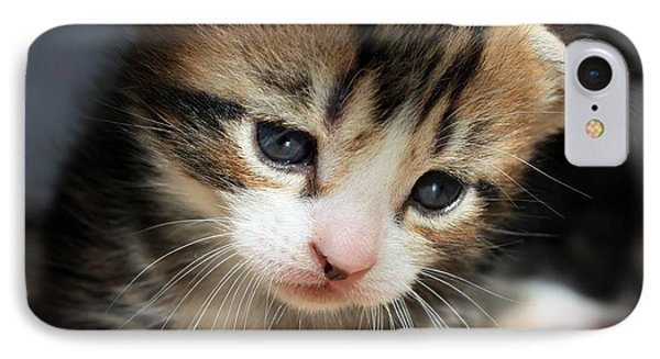 IPhone Case featuring the photograph Daydreamer Kitten by Terri Waters