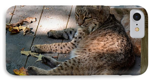 Daydreaming Bobcat IPhone Case
