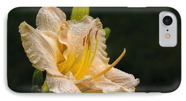 Daylily After A Morning Rain Phone Case by Madonna Martin
