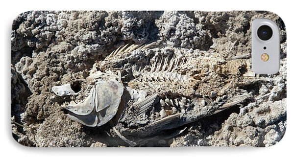 Dead Fish On Salt Flat IPhone 7 Case by Jim West