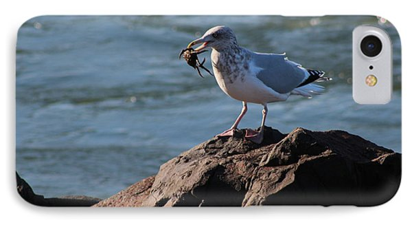 Death By Seagull IPhone Case by Nance Larson