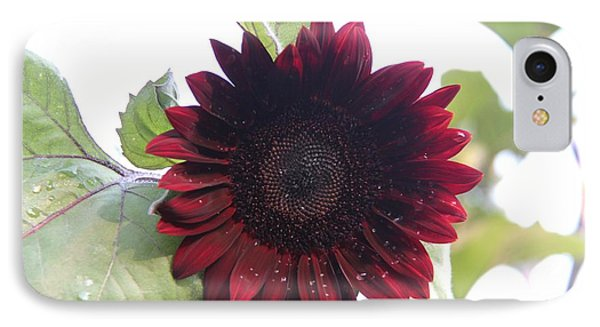 Deep Red Sunflower IPhone Case by Yumi Johnson