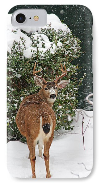 IPhone Case featuring the photograph Deer In Falling Snow by Peggy Collins
