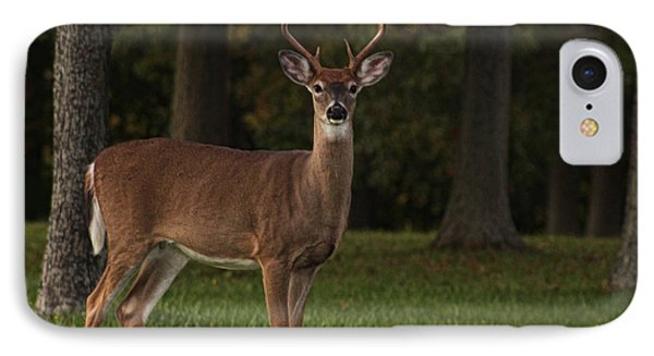 IPhone Case featuring the photograph Deer In Headlight Look by Tammy Espino
