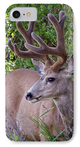 Buck In The Woods IPhone Case by Athena Mckinzie