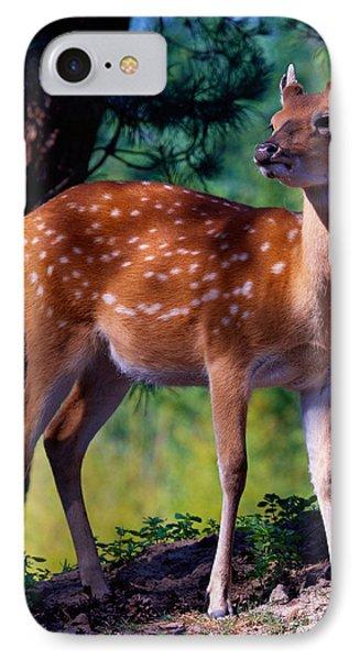Deer In The Woods IPhone Case