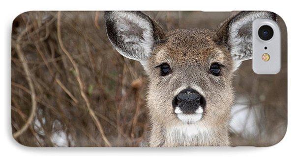 Deer IPhone Case by Jeannette Hunt