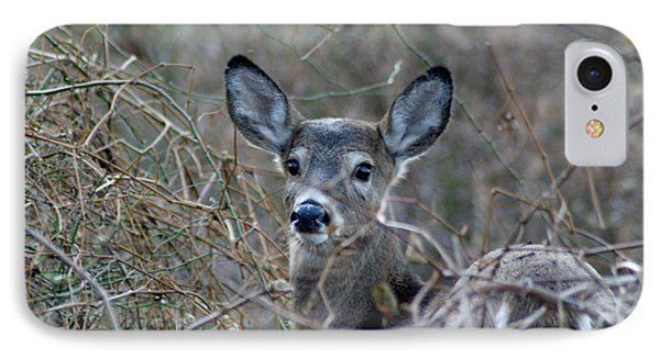 IPhone Case featuring the photograph Deer by Karen Silvestri