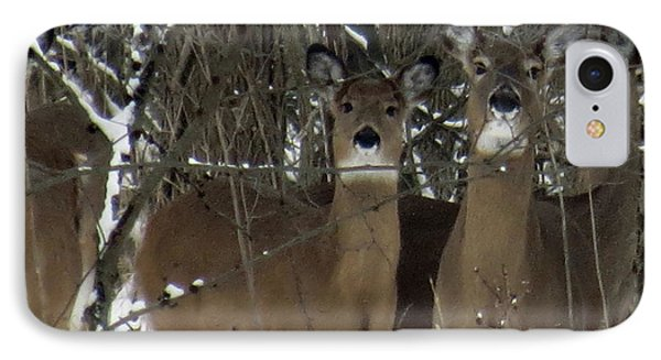 IPhone Case featuring the photograph Deer Posing For Picture by Eric Switzer