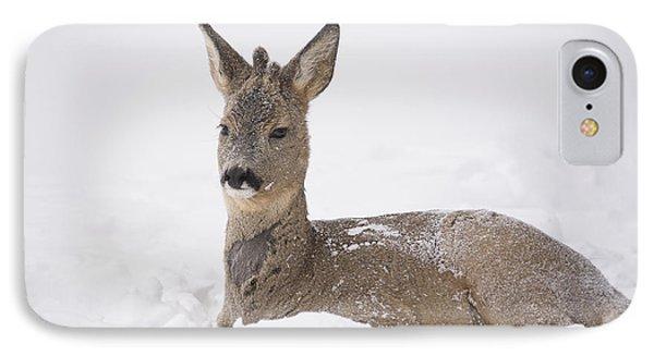 Deer Resting In Snow IPhone Case