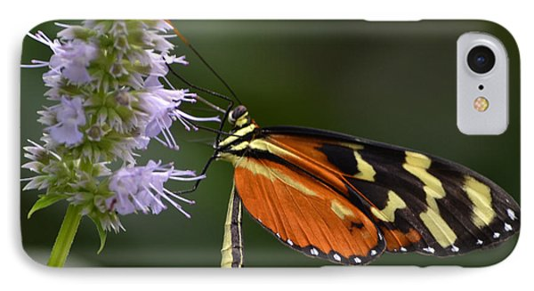 Delicacy IPhone Case by Mary Zeman