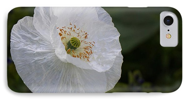 IPhone Case featuring the photograph Delicate Poppy by Inge Riis McDonald