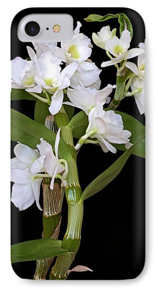 Dendrobium Nobile Orchid IPhone Case by Dr. Nick Kurzenko