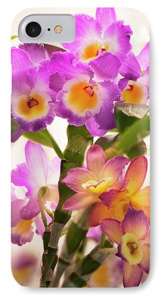 Dendrobium Nobile Orchid IPhone Case by Maria Mosolova