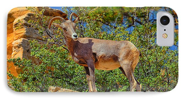 IPhone Case featuring the photograph Desert Bighorn Sheep by Greg Norrell