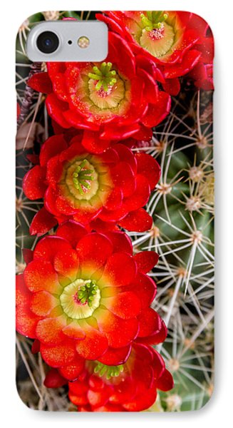 Desert Blooms IPhone Case