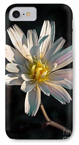 Desert Chicory IPhone Case