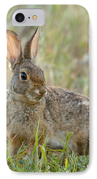 Desert Cottontail IPhone Case