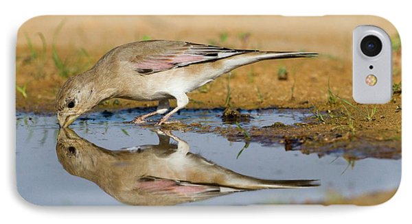 Desert Finch (carduelis Obsoleta) IPhone Case by Photostock-israel