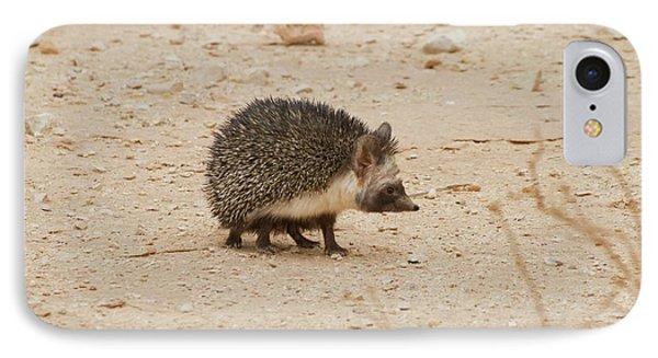 Desert Hedgehog (paraechinus Aethiopicus) IPhone Case by Photostock-israel