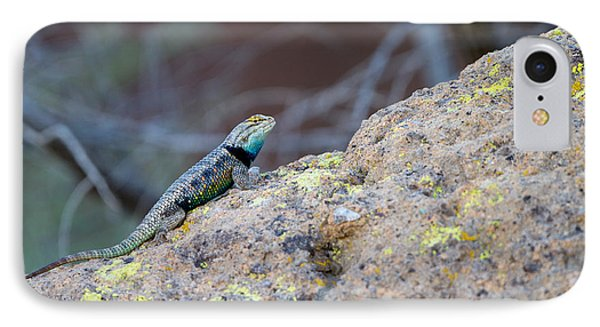 Desert Spiny Lizard IPhone Case by Martha Marks
