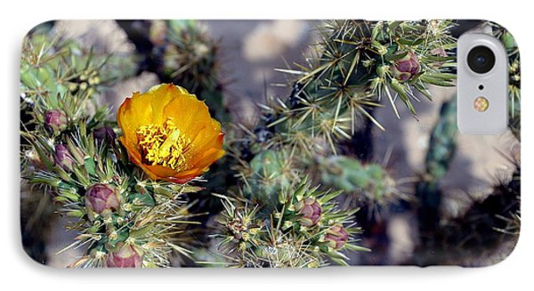 Desert Spring Photo IPhone Case by Antonia Citrino