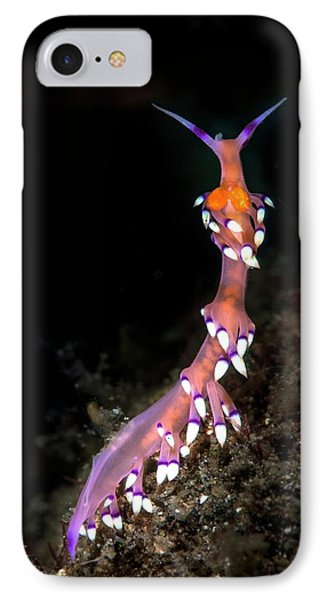 Desirable Flabellina IPhone Case by Ethan Daniels