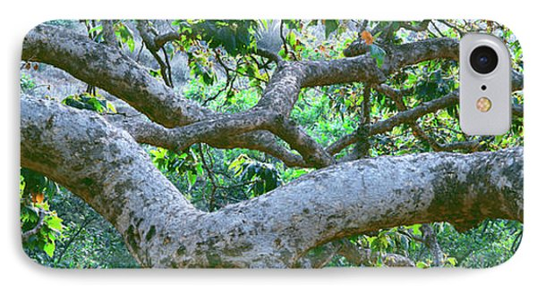 Detail Of Sycamore Tree In A Forest IPhone Case by Panoramic Images