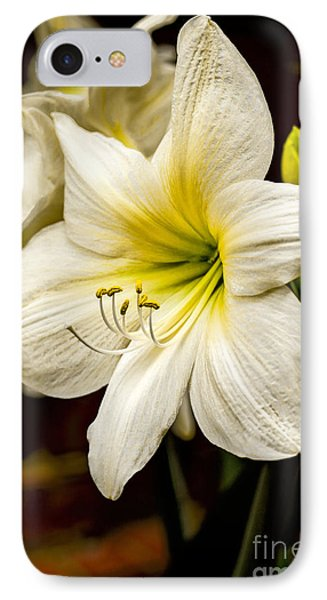 Detailed Amaryllis Phone Case by Dave Bosse