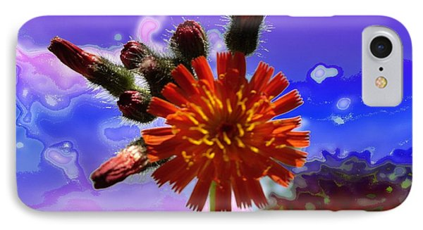Devil's Paintbrush IPhone Case by Mike Breau
