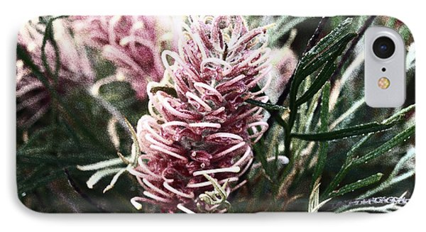 Dew Covered Grevillea IPhone Case by Cassandra Buckley