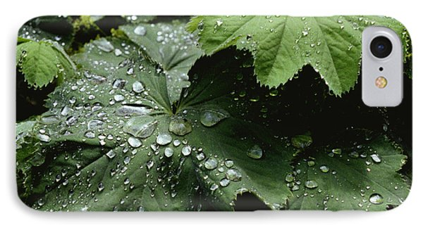 IPhone Case featuring the photograph Dew On Leaves 2 by Tom Brickhouse
