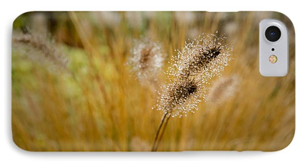 Dew On Ornamental Grass No. 4 IPhone Case