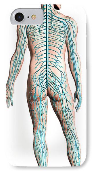 Diagram Of Human Nervous System Phone Case by Leonello Calvetti