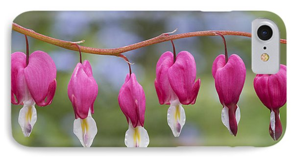 Dicentra Spectabilis Bleeding Heart Flowers IPhone Case by Tim Gainey