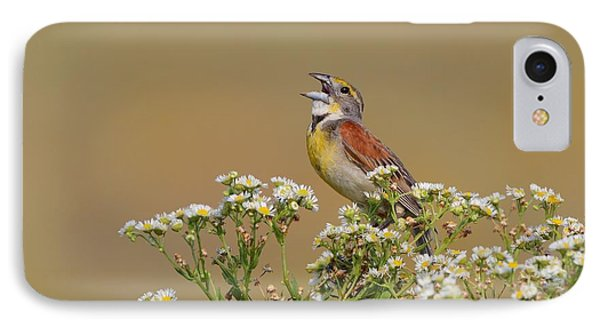 Dickcissel On Wild Daisies Phone Case by Daniel Behm