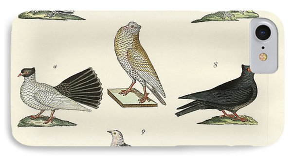 Different Kinds Of Pigeons IPhone Case