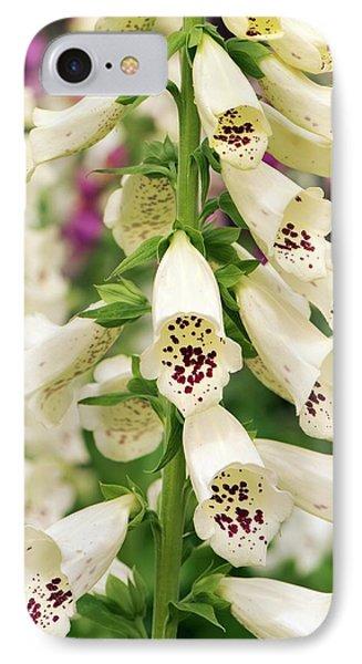 Digitalis Purpurea 'dalmatian Cream' IPhone Case