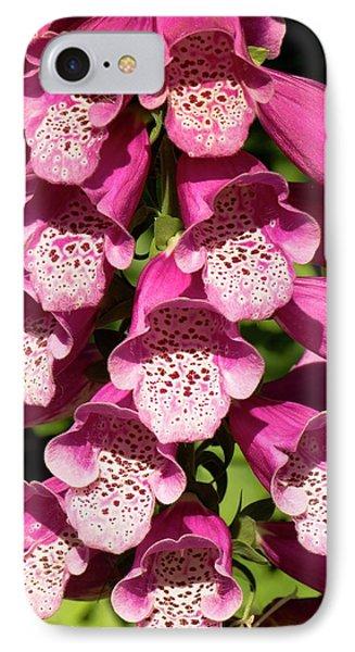 Digitalis Purpurea Excelsior Group IPhone Case