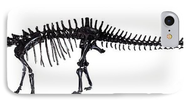 Diplodocus Dinosaur, Fossil Skeleton IPhone Case