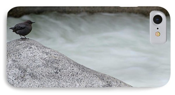 Dipper Bird On Rock At River IPhone Case by Panoramic Images