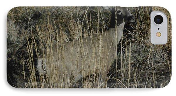 Doe Mule Deer IPhone Case