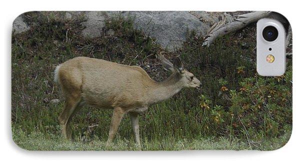 Doe Mule Deer Feeding IPhone Case