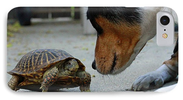 Dog And Turtle IPhone Case by Shoal Hollingsworth