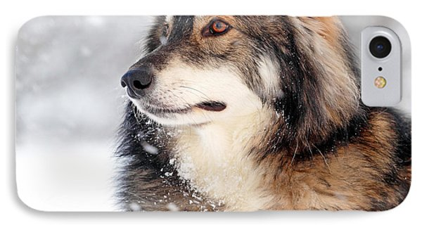 Dog In The Snow Phone Case by Grant Glendinning