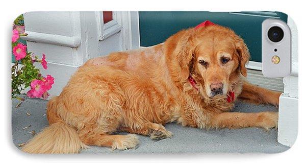 Dog In Waiting Phone Case by Eva Kaufman
