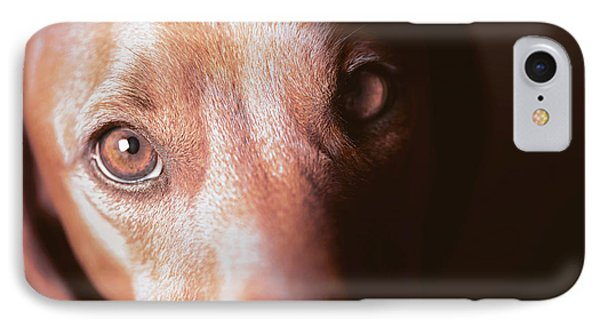 Dog Looking Towards Camera IPhone Case by Ktsdesign