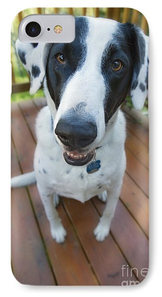 Dog On A Wooden Deck IPhone Case by Wave Royalty Free