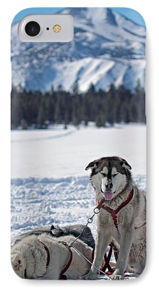 IPhone Case featuring the photograph Dog Team by Duncan Selby